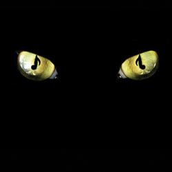 The Alleycats: Contemporary A Cappella